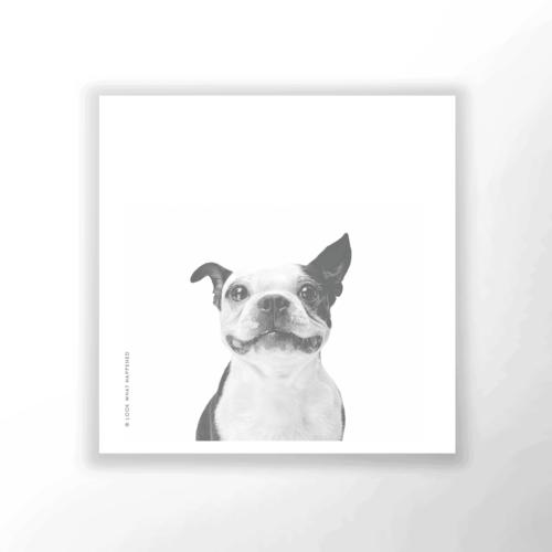 WAP DOG 02 1